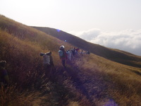 Line of porters walking across grassland