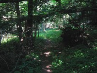 A narrow path leads through a dark coniferous forest, shafts of light shine down through gaps in the foliage.