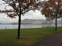 In the foreground stand two trees with orange leaves, between them is a view across a lake to a marina, high apartment blocks and a hill.