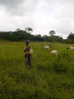 Fulani boy with sheep